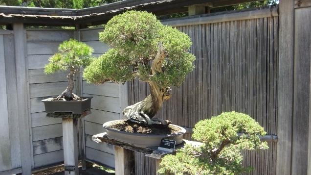 Huntington Bonsai Garden DSCF2241