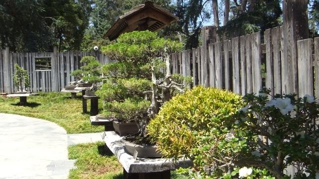 Huntington Bonsai Garden DSCF2252