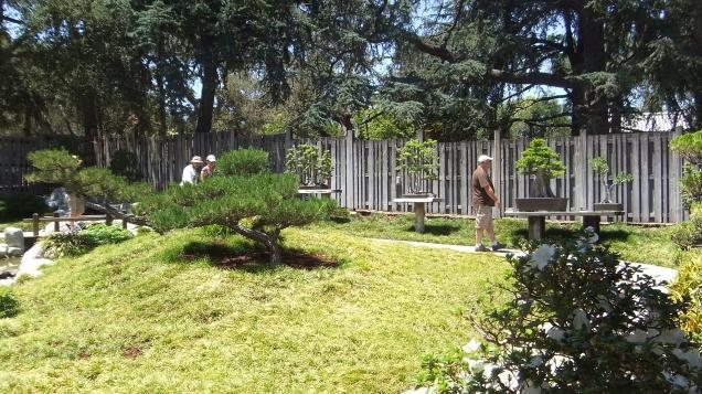 Huntington Bonsai Garden DSCF2253