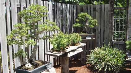 Huntington Bonsai Garden DSCF2254