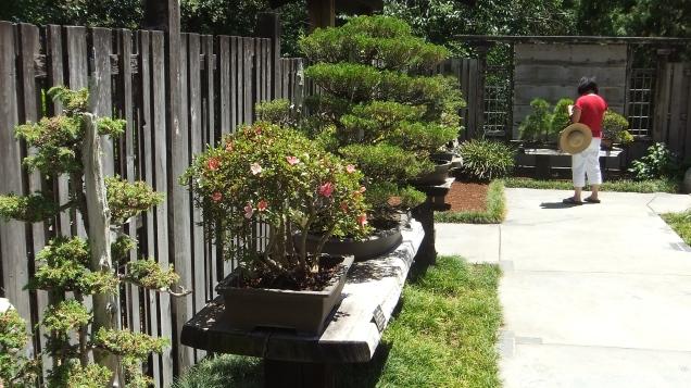 Huntington Bonsai Garden DSCF2257