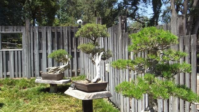 Huntington Bonsai Garden DSCF2258