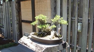 Huntington Bonsai Garden DSCF2268