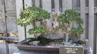 Huntington Bonsai Garden DSCF2269