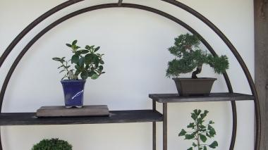 Huntington Bonsai Garden DSCF2275