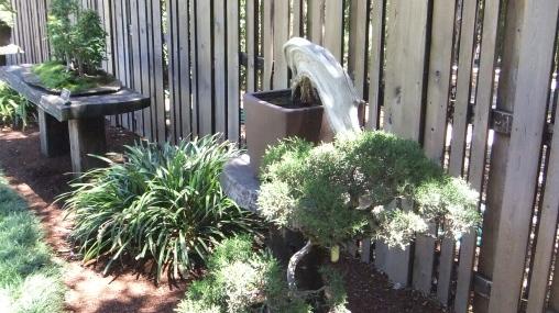 Huntington Bonsai Garden DSCF2280
