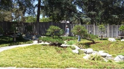 Huntington Bonsai Garden DSCF2286