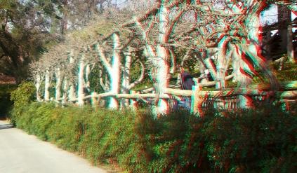 Huntington Japanese Garden 3DA 1080p DSCF1343