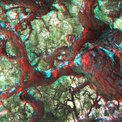 Huntington Japanese Garden 3DA 1080p DSCF2123