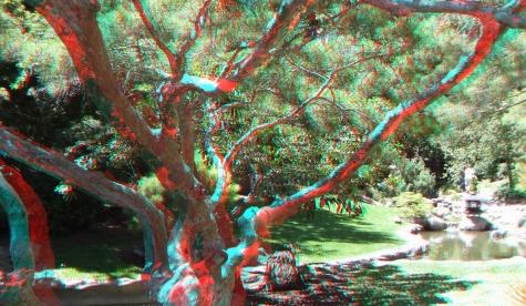 Huntington Japanese Garden 3DA 1080p DSCF2336