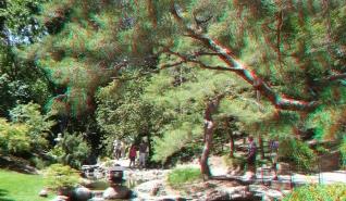 Huntington Japanese Garden 3DA 1080p DSCF2339