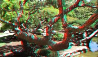 Huntington Japanese Garden 3DA 1080p DSCF2341