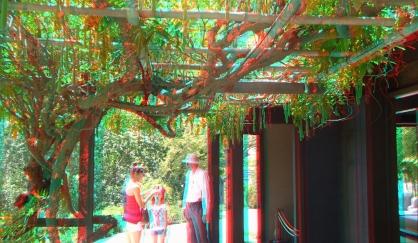Huntington Japanese Garden 3DA 1080p DSCF3014