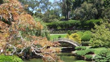 Huntington Japanese Garden DSCF2142