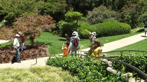 Huntington Japanese Garden DSCF2154