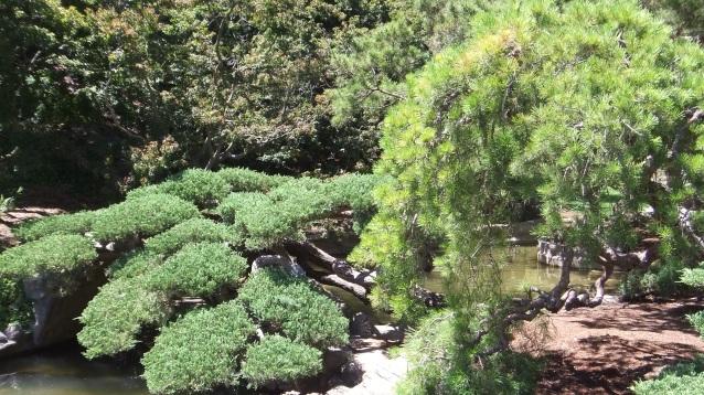 Huntington Japanese Garden DSCF2326