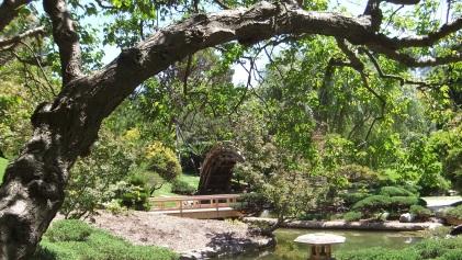 Huntington Japanese Garden DSCF2329