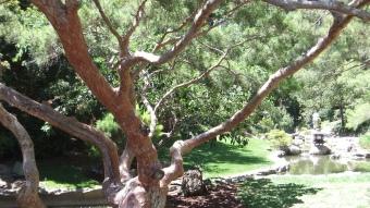 Huntington Japanese Garden DSCF2336