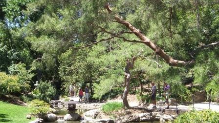 Huntington Japanese Garden DSCF2339