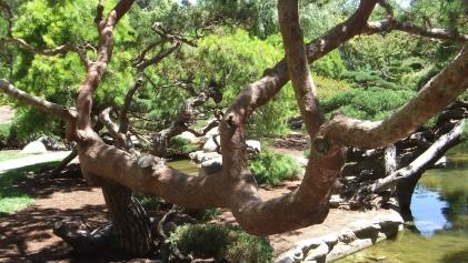Huntington Japanese Garden DSCF2341