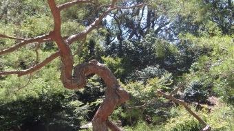 Huntington Japanese Garden DSCF2350