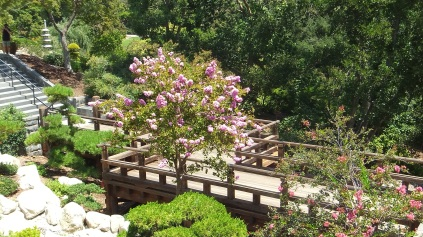 Huntington Japanese Garden DSCF3023