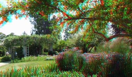 Huntington Shakespeare Garden 3DA 1080p DSCF0383