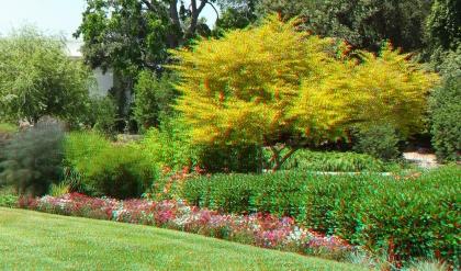 Huntington Shakespeare Garden 3DA 1080p DSCF0970