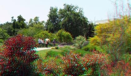 Huntington Shakespeare Garden 3DA 1080p DSCF0976