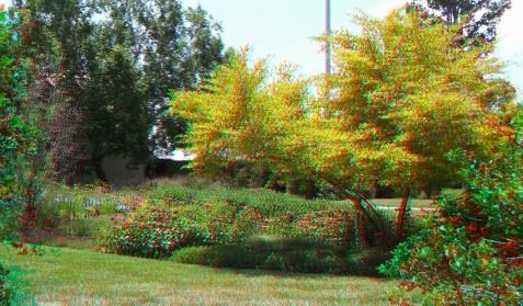 Huntington Shakespeare Garden 3DA 1080p DSCF1021