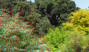Huntington Shakespeare Garden 3DA 1080p DSCF3079