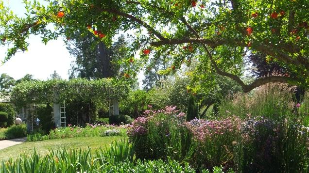 Huntington Shakespeare Garden DSCF0383