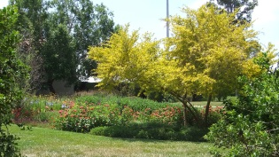 Huntington Shakespeare Garden DSCF1021