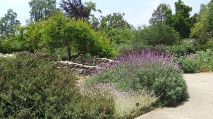 Huntington Shakespeare Garden DSCF1024