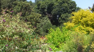 Huntington Shakespeare Garden DSCF3079
