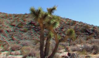 Pinto Wye Mine Site Joshua Tree NP 3DA 1080p DSCF7243