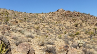 Pinto Wye Mine Site Joshua Tree NP DSCF7248
