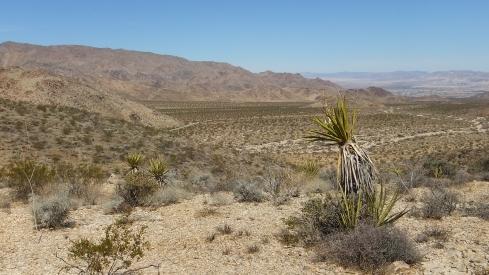 Pinto Wye Mine Site Joshua Tree NP DSCF7260