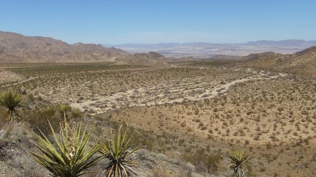 Pinto Wye Mine Site Joshua Tree NP DSCF7309