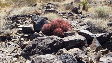 Pinto Wye Mine Site Joshua Tree NP DSCF7317