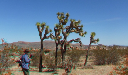 The Hen House Joshua Tree NP 3DA 1080p DSCF7371