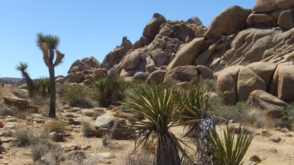 The Hen House Joshua Tree NP DSCF7321