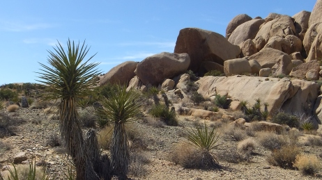 The Hen House Joshua Tree NP DSCF7458