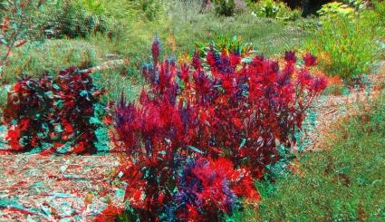 Huntington Herb Garden 3DA 1080p DSCF2374