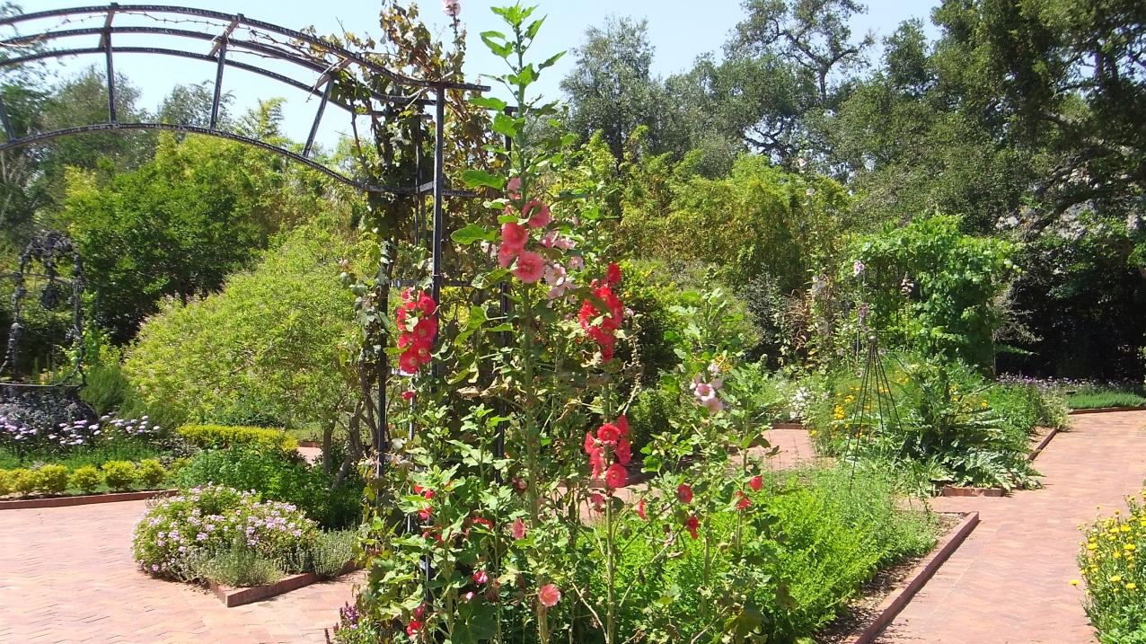 Huntington Herb Garden DSCF0340