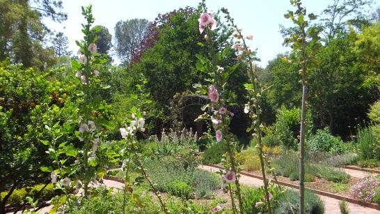 Huntington Herb Garden DSCF0347