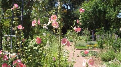 Huntington Herb Garden DSCF2373