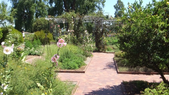 Huntington Herb Garden DSCF2380