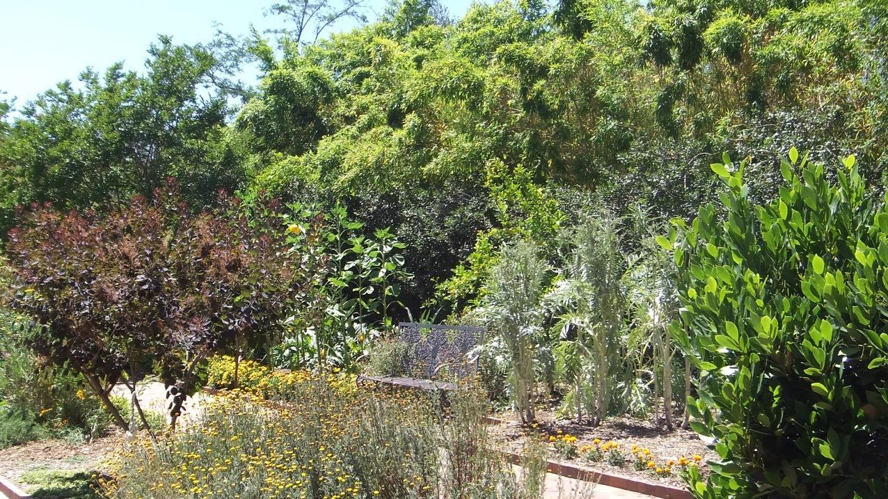 Huntington Herb Garden DSCF2381