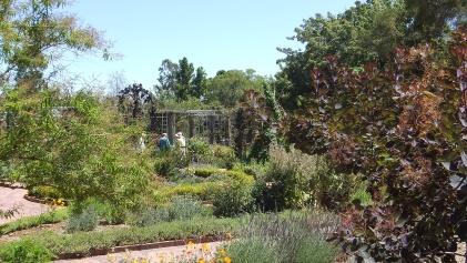 Huntington Herb Garden DSCF2385
